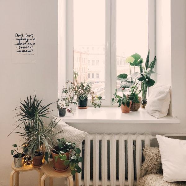 Green Plants Inside