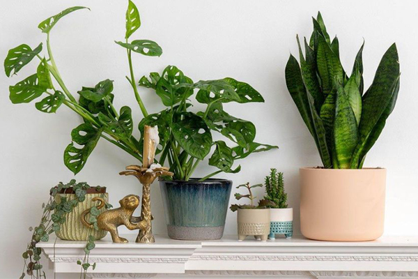 House Plants For Health